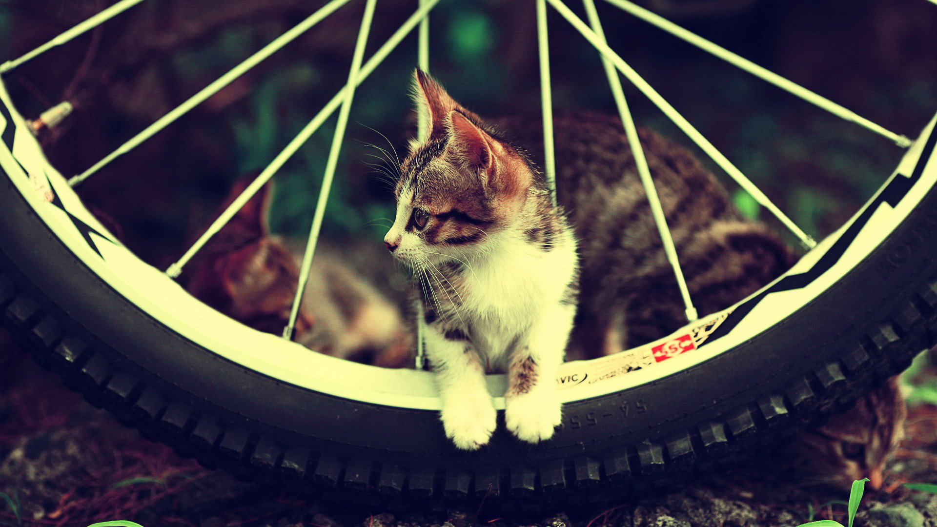 Cute Cat Cycle Wallpapers For Girls Hd And 4k Wallpaper Collections